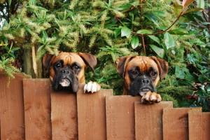 Zlokalizuj swojego zwierzaka dzięki lokalizatorom