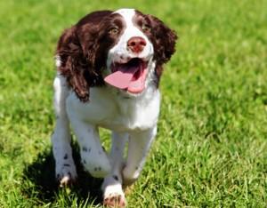 Szarpanie podczas spacerów z psem to nie problem