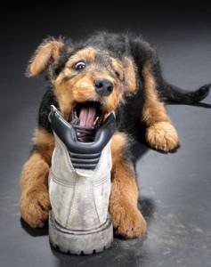Zabawki zamiast buta dla psa