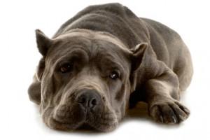 Kontrolowanie psów dzięki drzwiczkom dla zwierząt